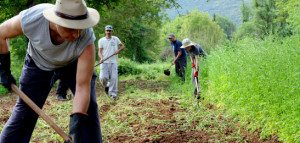 Permaculture in Greece today
